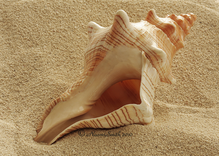 the conch a symbol of authority in the novel lord of the flies by william golding Literary analysis of lord of the flies william golding shows us through the symbols of jack merridew and the conch shell that the desire to have power and instant surpasses the importance of a civilization in william golding's the lord of the flies the conch symbolizes what a.